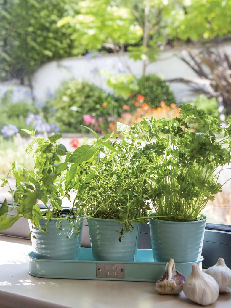 Herb pots