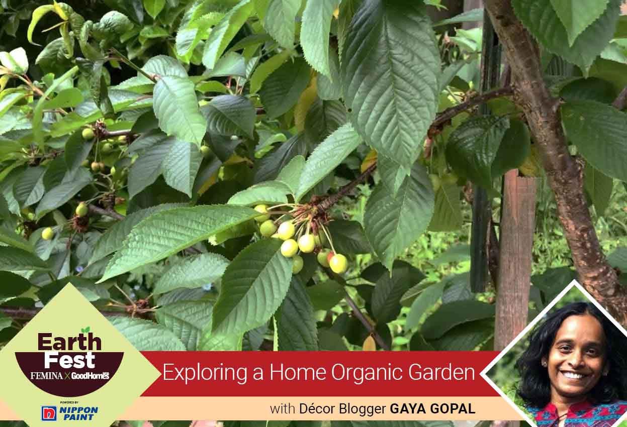 Exploring a home organic garden