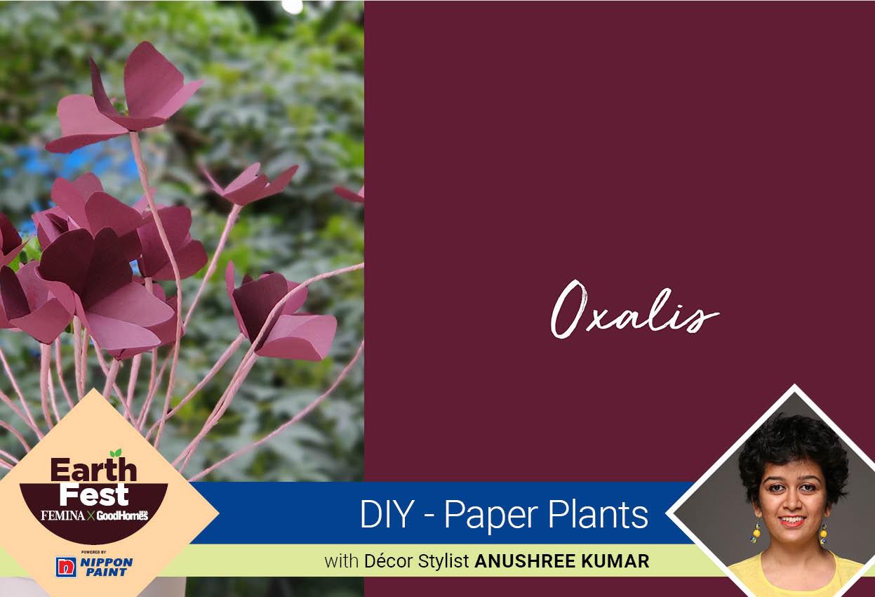 DIY- Paper Plants: Oxalis