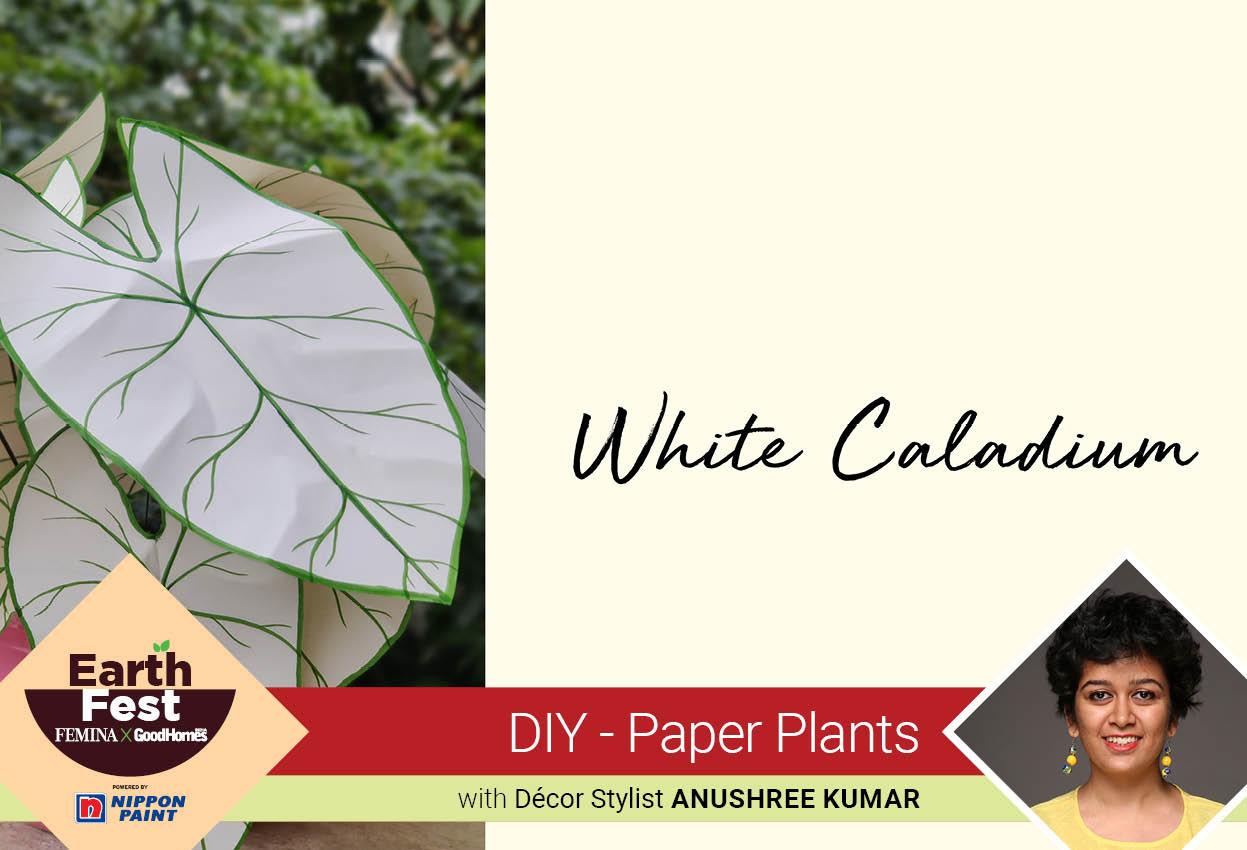 DIY- Paper Plants: White Caladium