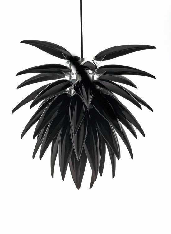 Aloe Noir, 300 dpi, Jeremy Cole.jpg